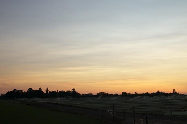 夕焼け農場 5