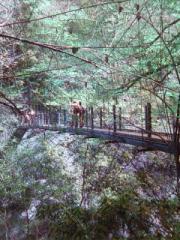 高尾山吊り橋「みやま橋」