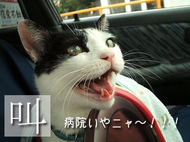 聞いてニャい~~!(怒)