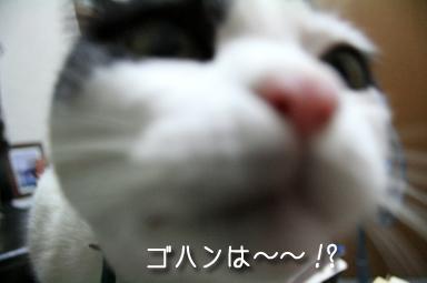 ねぇ~~~ってばニャ~~~