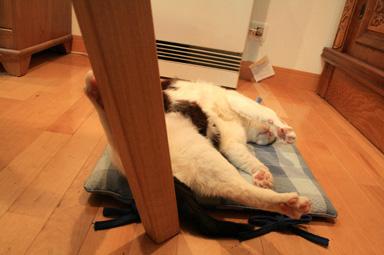 アンヨが机の足にかかってます