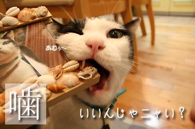 貝殻いっこ破壊したちぃくん(-_-;)