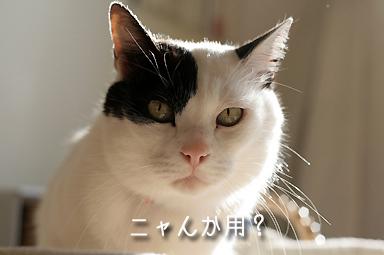 白黒福ちゃん