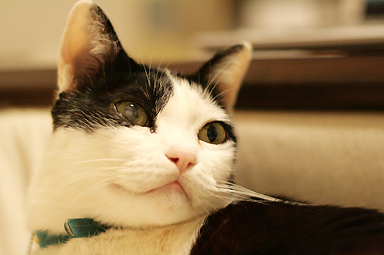 よく猫さんを撮りますが