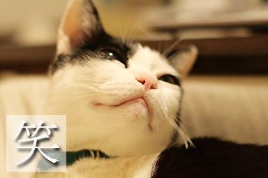 ちぃくんより美しい猫さんがほぼ全てです