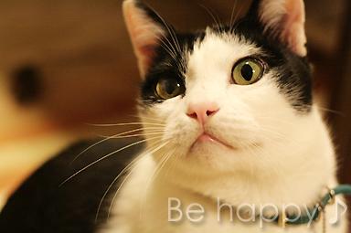 今日も笑顔で元気にニャ♪