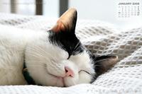 猫さんと暮らす方は愛猫壁紙でしょうけど^^;