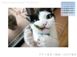 Chibi壁紙カレンダー2008年8月その3