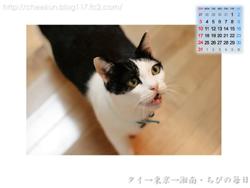 Chibiカレンダー2008年8月その1