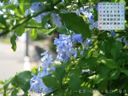 湘南風景壁紙カレンダー2008年8月その3