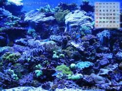 湘南風景壁紙カレンダー2008年8月その1