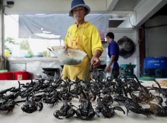 thailand scorpion