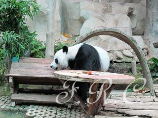 チェンマイ動物園タイランド観光ツアーオプショナルツアー