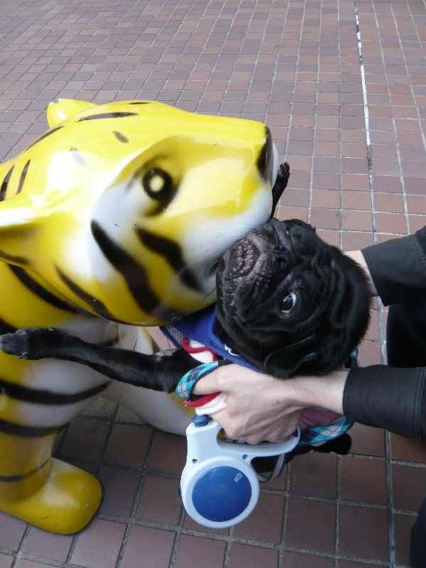 トラ怖いでしゅ
