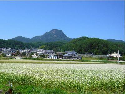 08-9-12 そば畑2青き