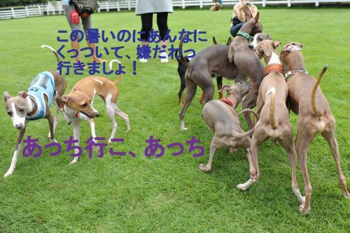 DSC_0290_convert_20090721013730.jpg