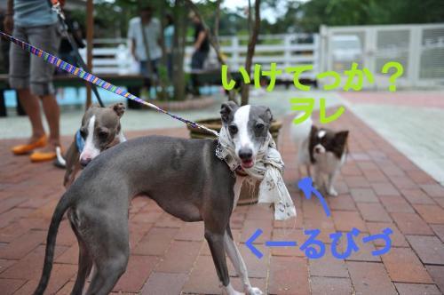 DSC_0374_convert_20090720230750.jpg