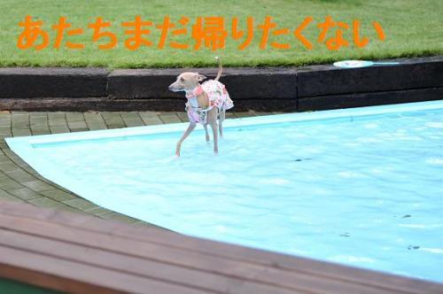 DSC_0450_convert_20090720230127.jpg
