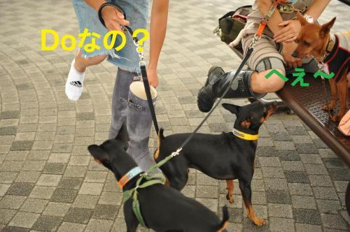 DSC_9375_convert_20090624002908.jpg