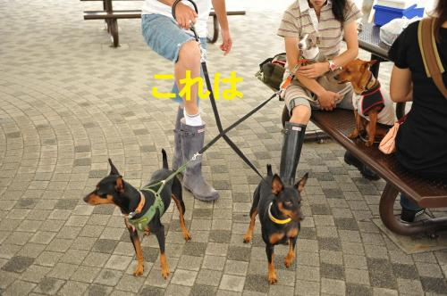 DSC_9377_convert_20090624002925.jpg
