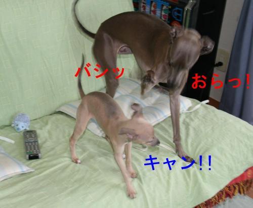 IMG_6539_convert_20090310155327.jpg
