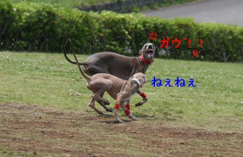 IMG_7502_convert_20090514170259.jpg