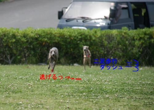 IMG_7504_convert_20090514170910.jpg