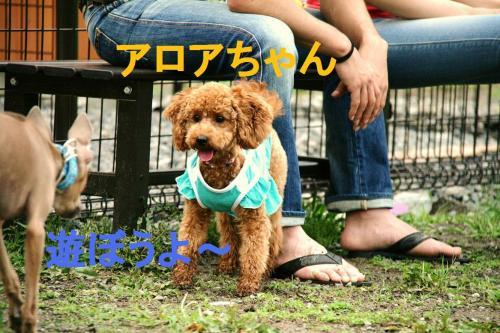 IMG_8417_convert_20090621234250.jpg
