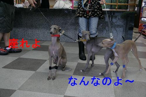 IMG_9792.jpg