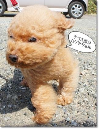 ねずみ犬?