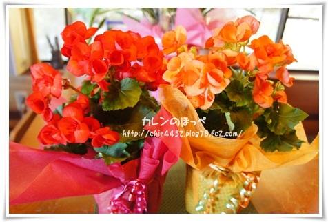 赤とオレンジのお花