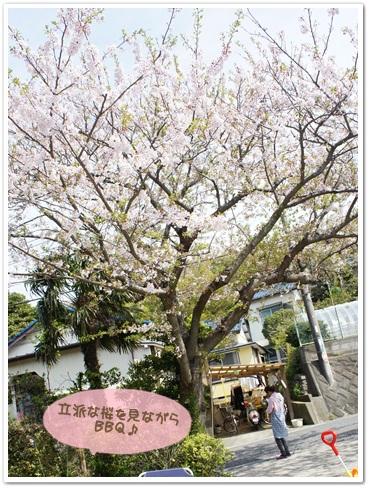 すばらしい桜の木
