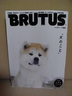 080218 brutus