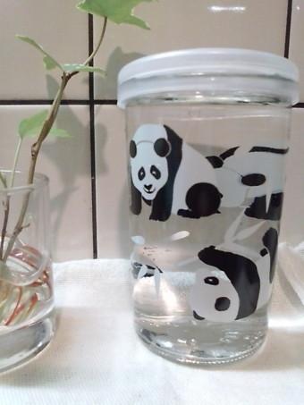 090321 panda