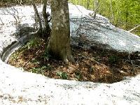 木が持つ熱でこんなふうに丸く雪が融ける