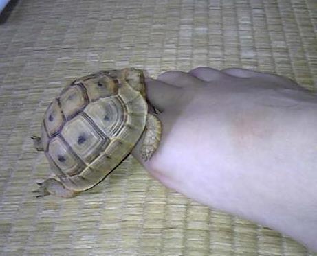 足の上で寝てるソフレ