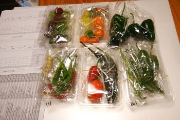 081001_peppers.jpg