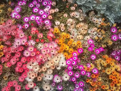 地面に咲く花束のよう