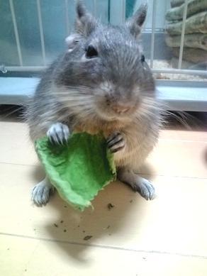 ティノくん、桑の葉を食べる