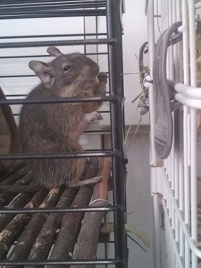 加奈ちゃんのチモシーを食べるティノくん♪
