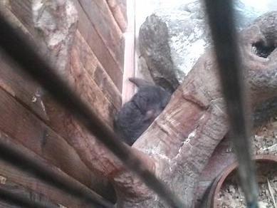 上野動物園のチンチラちゃん(その2)