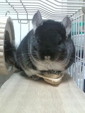 ダイエット頑張ります!p(・∩・)q