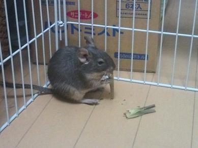 ティノくん、ニンジンの葉を食べる