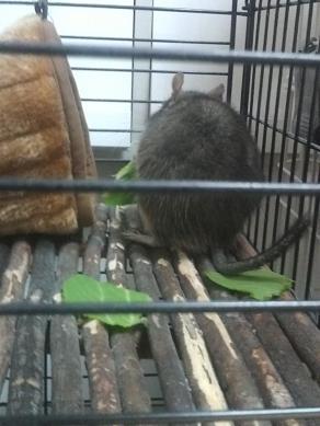 チンゲンサイを食べるティノくん