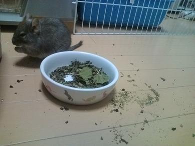 ティノくん、お食事中♪