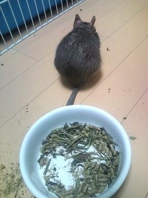 ティノくん、ご飯中~♪
