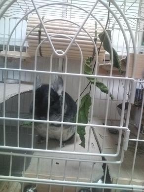 桑の葉を食べる加奈ちゃん