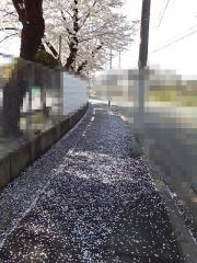 20110409150945.jpg