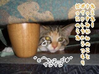 mmf060816-9.jpg