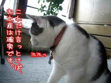 2008-8-24-3.jpg